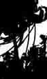 treesilhouettes.jpg